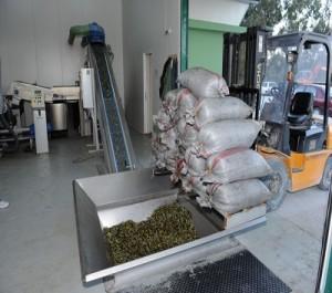 Διαδικασία επεξεργασίας και παραγωγής ελαιολάδου2